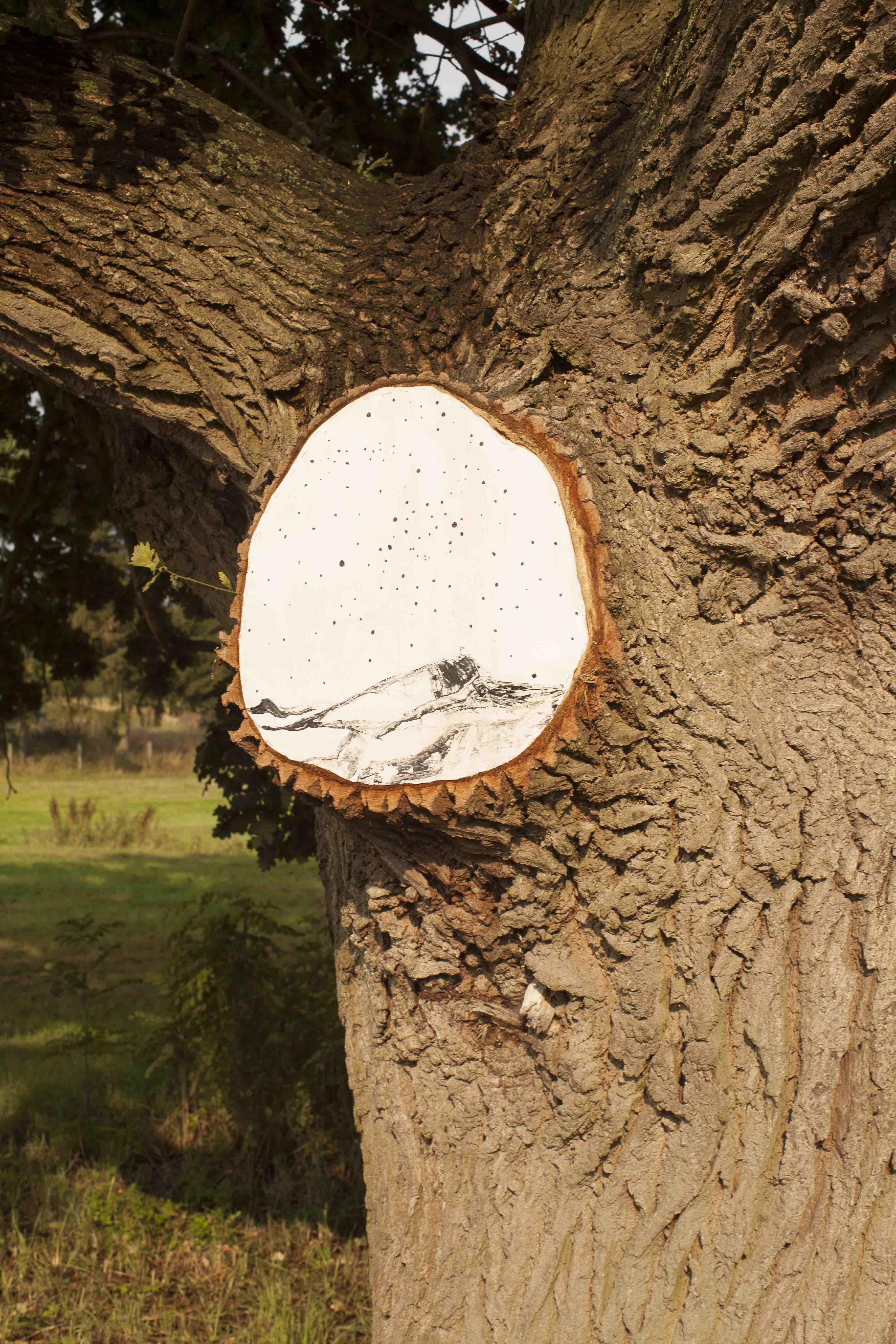 TREES DON´T TALK, Detailansicht